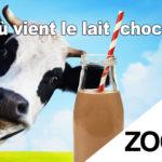 [Zoom#2] Le lait chocolaté vient des vaches marron